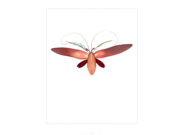 Poster w passe-partout - Insect 10