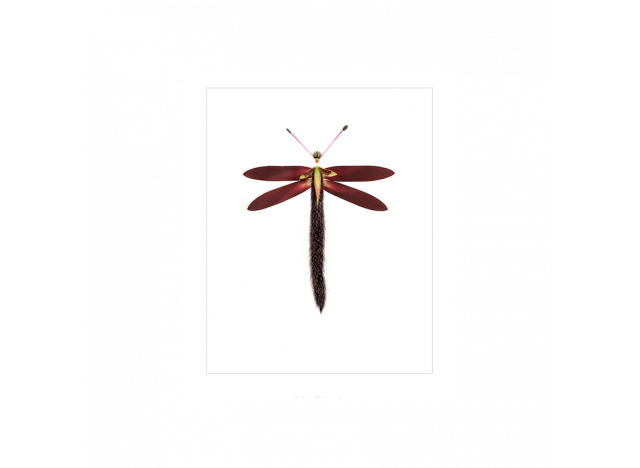 Poster w passe-partout - Insect 9