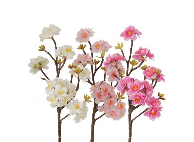 Fersken blomst HvidLyserødRosa