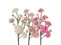 Peach Blossom White, Pink, Rose