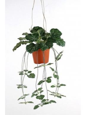 Saxifraga i ampel 35cm, grøn