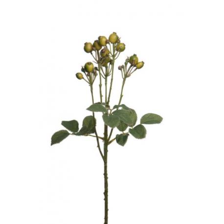Bærkvist 50cm, grøn