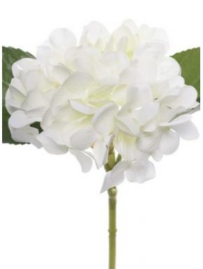 Hortensia 25cm, hvid