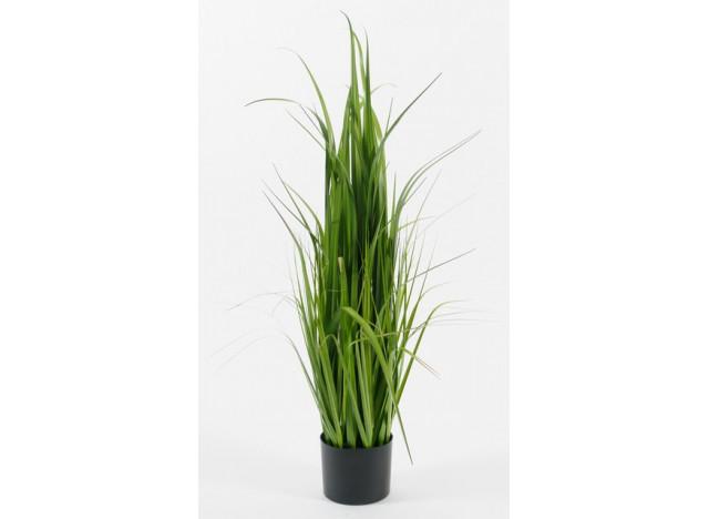 Græs i potte 110cm