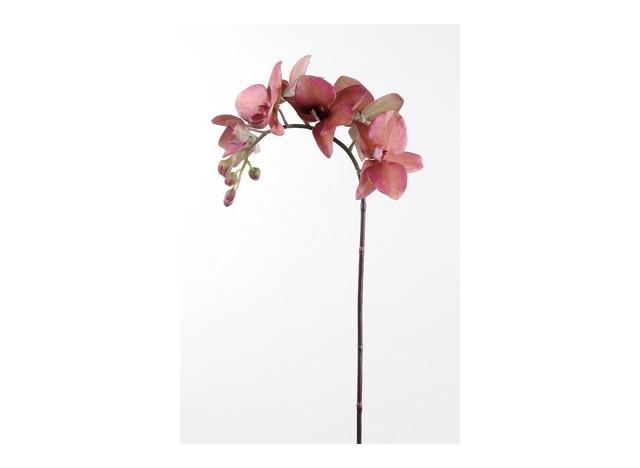 Orkide vinrød 60cm