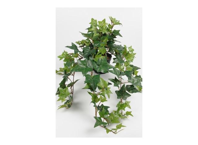 Hedera i potte 60cm, grøn