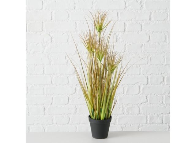 Græs H60cm Onion