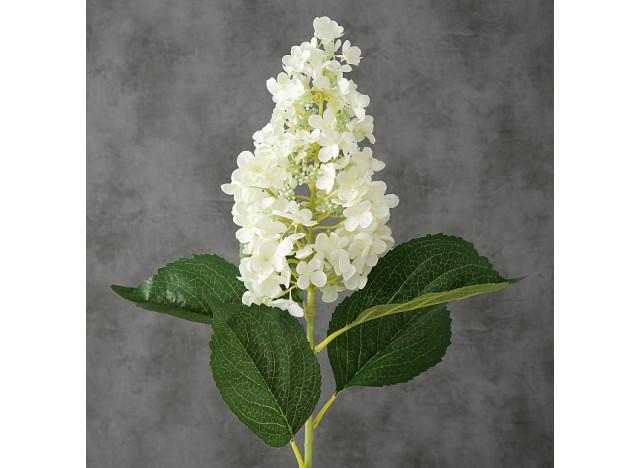Hortensia Hvid 98cm