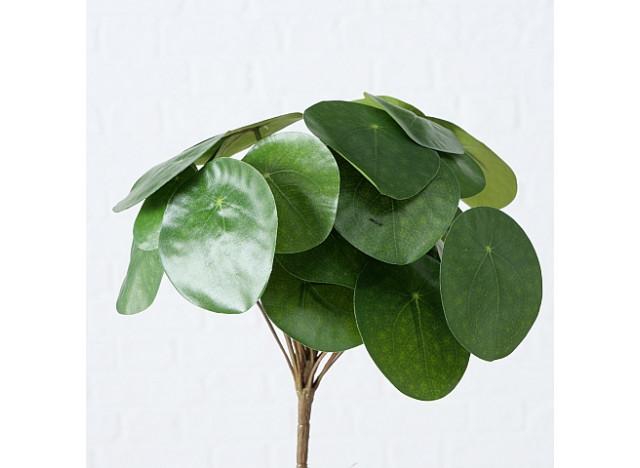 Pilea plante H25cm