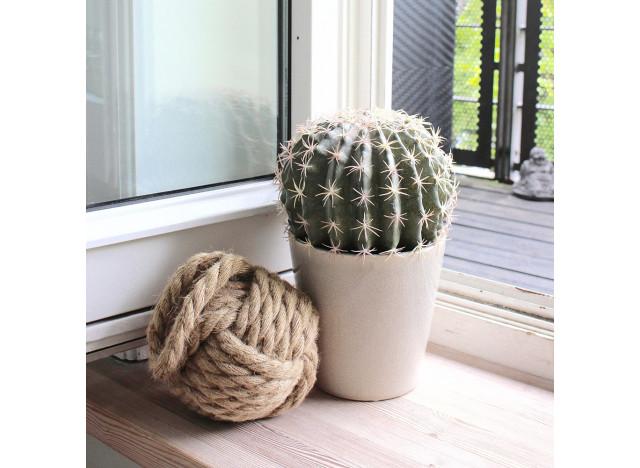 Kaktus Ø20